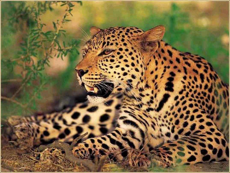 Luipaard - Dieren - Droomplekken